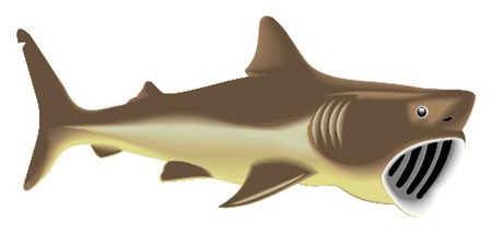great basking shark Illustration
