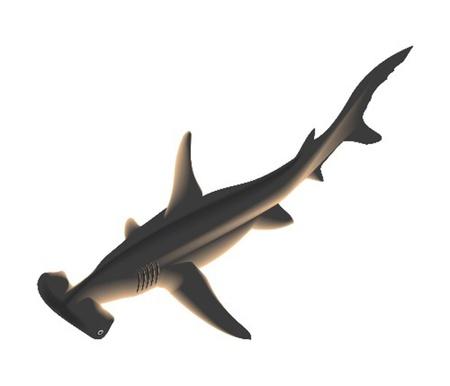 praiseworthy: hammer-headed shark Illustration