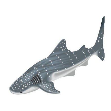 whale underwater: whale shark Illustration