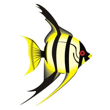 exotic fish: peces