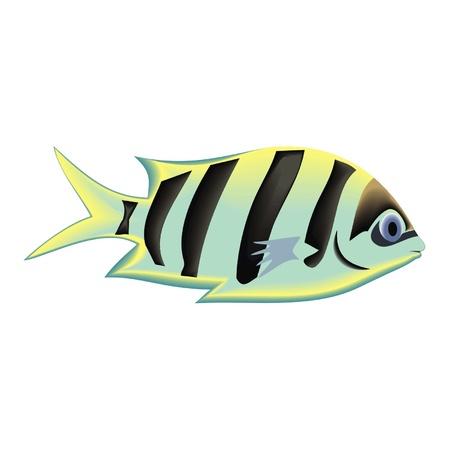 fish Stock Vector - 19876992