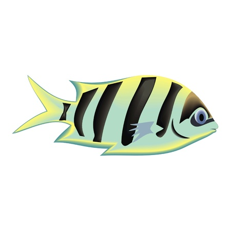 trigger fish: fish