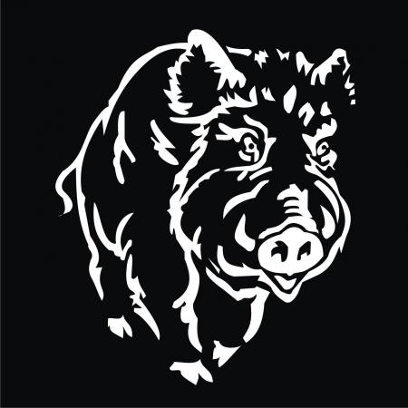 eber: Wildschwein Illustration