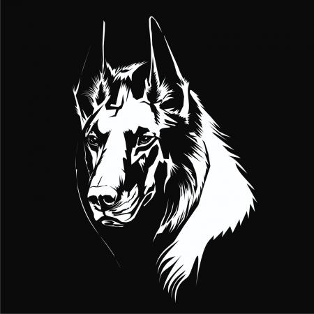 wolf Stock Vector - 20098512