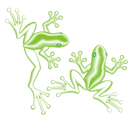 eyed: two frogs Illustration