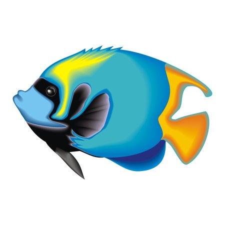 angel fish: fish