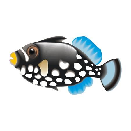 anemonefish: fish
