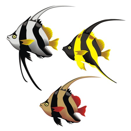 trigger fish: Fishes