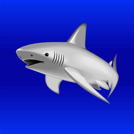 ichthyology: shark