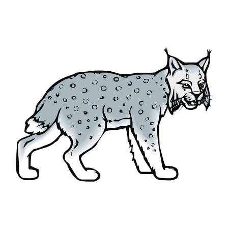 lince: lince Vectores