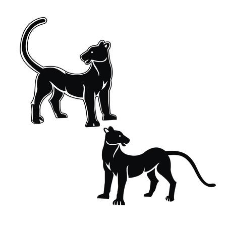 panthers: panthers Illustration