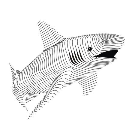 carcass: haai karkas