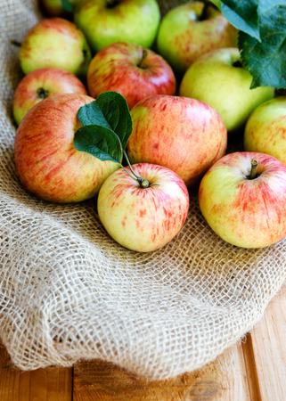 sackcloth: Harvest of apples on sackcloth