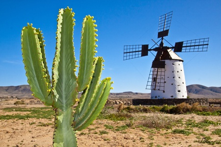Cactus and the traditional stony windmill at the Fuertaventura