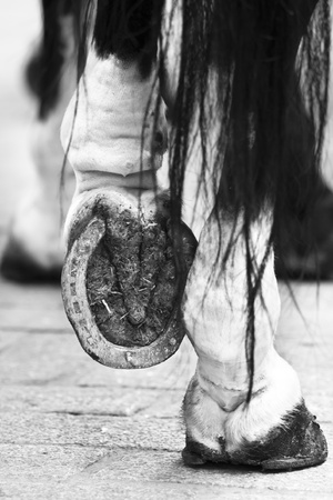 horse tail: Black and white close up of the horseshoe.