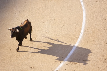bullfighting: Bull in the bullring fuming with rage.