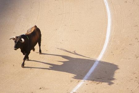 corrida de toros: Toro en la Plaza de toros fumante con rabia. Foto de archivo