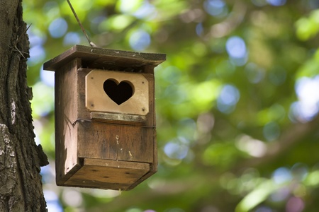 Bird house hanging from the tree with the entrance hole in the shape of a heart. photo