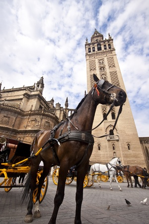 In front of the Cathedral. White horse and traditional tourist carriage in Sevilla, Spain. Extreme low angle shot. Stock Photo
