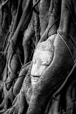 ead of Sandstone Buddha overgrown by Banyan Tree,  Ayutthaya historical park, Thailand Stock Photo - 12932771