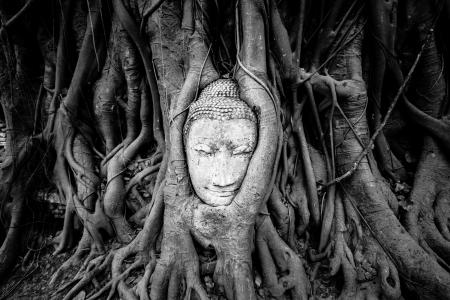 cabeza de buda: Jefe de arenisca cubierto por el Buda de Banyan Tree, Parque Histórico de Ayutthaya, Tailandia