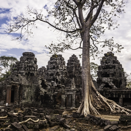 Tree in the ancient temples of Angkor Wat, near Siem Reap, Cambodia, South East Asia. photo
