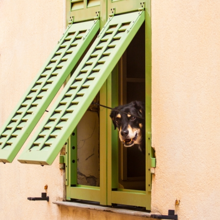 Dog looking trough the rustic window. photo