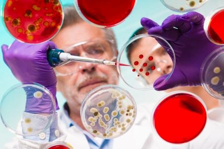 bacterie: Gericht senior life science professional pipetteren oplossing in het pettri schotel. Lens focus op de rode druppels op het glas.