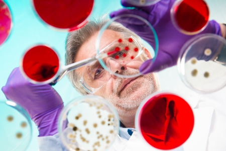 Focused senior life science professional pipetting solution into the pettri dish.  Lens focus on the researcher. Stock Photo