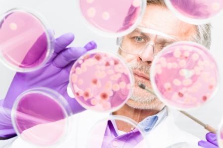 globulos blancos: Enfocado altos ciencias de la vida profesional bacterias injerto en los platos pettri. Lente foco en la cara de las personas.