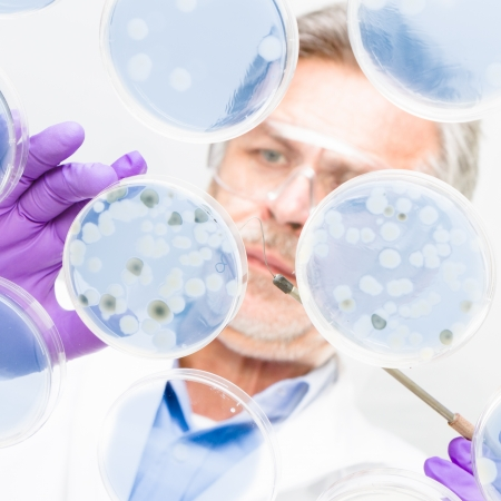 Focused senior life science professional grafting bacteria in the petri dishes.  Lens focus on the working surface. Stock Photo