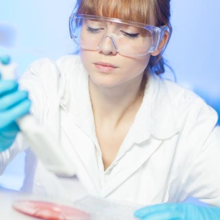 Enfocado jóvenes profesionales de ciencias biológicas de pipeteo colonias de células que contienen los medios de comunicación en la placa de Petri. Lente de enfoque en el ojo del investigador. Foto de archivo