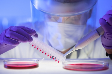 virus protection: Focused life science professional pipetting human serum media containing HIV infected cells from petri dish to microtiter plate. High protection degree work.