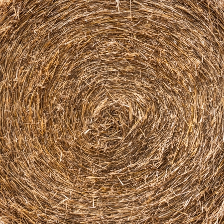 Close up of the golden straw bale in summer. photo