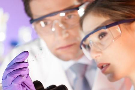 doctoral: Attraente giovane scienziato e il suo posto supervisore di dottorato guardando il vetrino da microscopio in laboratorio forense Archivio Fotografico