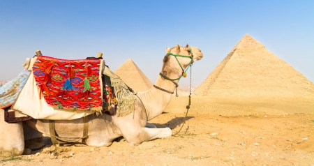 historical sites: A patient camel with a colorful saddle waits for its owner in front of the pyramids of Giza in Cairo, Egypt  Vertical