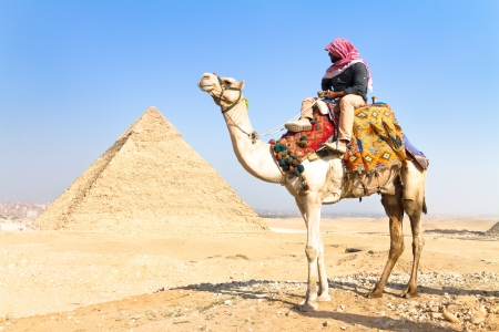 A patient camel with a colorful saddle waits for its owner in front of the pyramids of Giza in Cairo, Egypt  Vertical