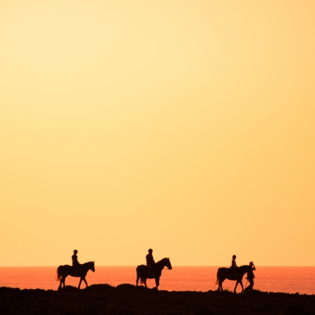 sea horse: Silhouettes of the horse riders on the coast. Stock Photo