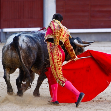 bull fight: Traditional corrida - bullfighting in spain. Bulfighting has been prohibited in Catalunia since 2011 for animal torturing.