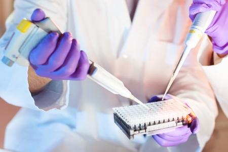 tubo de ensayo: Profesionales en ciencias biol�gicas pipeteo soluci�n maestro de la mezcla en la PCR de 96 pocillos utilizando micro pipeta multicanal. Foto de archivo