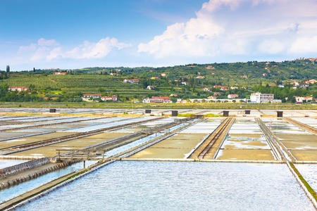 salina: Natural park Secovlje Salina in Slovenia, Europe  View of Salt evaporation ponds with green mediterranean hills in background