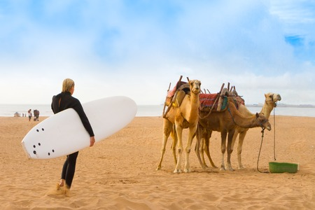 animal sexy: Female surfer and camels at the beach of Essaouira, Morocco, Africa
