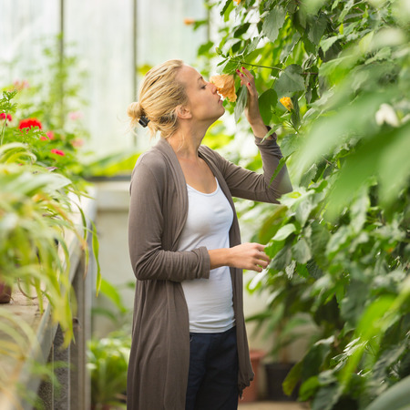 Florists woman smelling flowers in a greenhouse.  photo