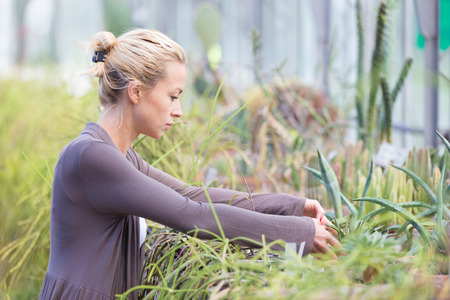 Florists woman working with topical plants and cacti in a greenhouse.  photo
