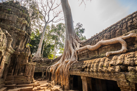 ancient near east: Tree in the ancient temples of Ta Phrom, Angkor Wat, near Siem Reap, Cambodia, South East Asia.