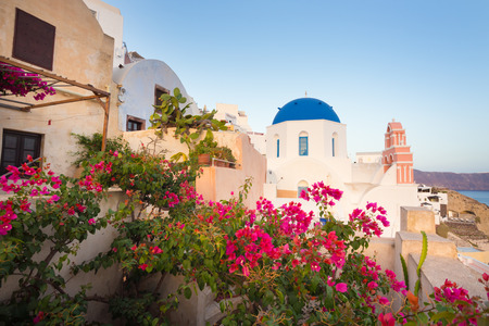 World famous traditional whitewashed chuches and houses and lush floral vegetation of Oia village on Santorini island, Greece. Sunset light. photo