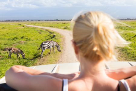 Woman on african wildlife safari observing zebras from open roof safari jeep. Rear view. Focus on zebras.