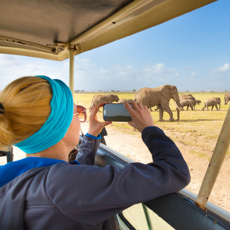 Woman on african wildlife safari. Lady taking a photo of herd of wild african elephants with her smartphone.  Focus on elephants.