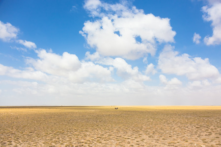 vast: Wildebeests in vast african wilderness. Dramatic dry landscape of Amboseli National Park, formerly Maasai Amboseli Game Reserve. Stock Photo