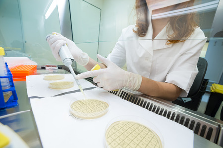 taken: Female life scientist researching in laboratory, pipetting cell culture medium samples on petri dishes in laminar flow. Photo taken from laminar interior.